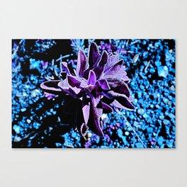 Indigo purple succulent plants alien planet Canvas Print