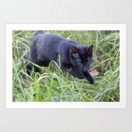 Hunting Cat Art Print