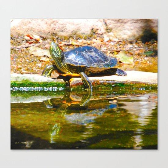 Red Ear Slider Turtle Canvas Print