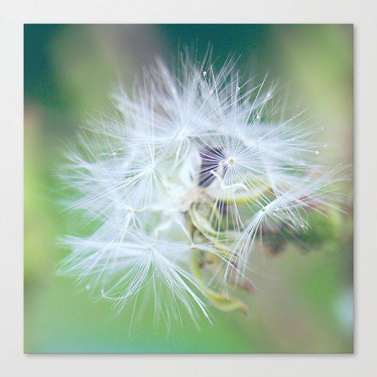 Plant a Wish Canvas Print