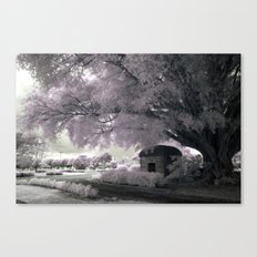 Infrared Pink Canvas Print