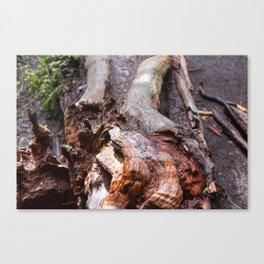 Wood patterns Canvas Print
