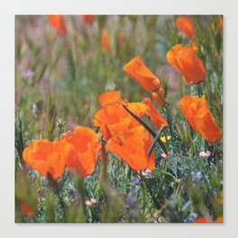 Pack of Poppies Canvas Print