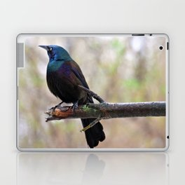 Yonder  (Common Grackle) Laptop & iPad Skin