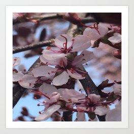 Bloomin' Blossoms #2 Art Print