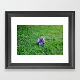 Squirrel 1 Framed Art Print