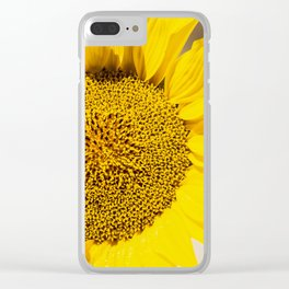 Sunflower (Helianthus Anuus) in the morning sun is a sign of the bright colors of Summer. Clear iPhone Case