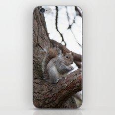 Squirrel with peanut iPhone & iPod Skin