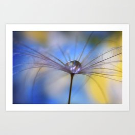 Cool Water A droplet on a Dandelion Seed Parachute Art Print