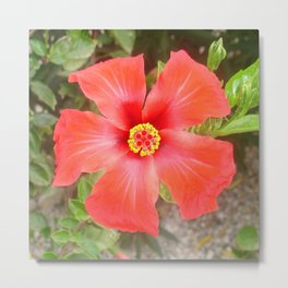 Head On Shot of a Red Tropical Hibiscus Flower Metal Print