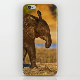 Young african elephant, wildlife iPhone Skin