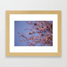 Prunus Framed Art Print