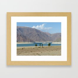 Camels in front of Orto Tokoy reservoir in Kyrgyzstan Framed Art Print