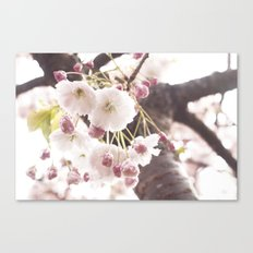 cherry flower tree Canvas Print