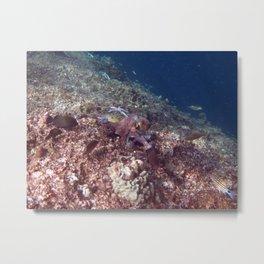 Reef Octopus Metal Print