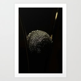 Silver and decoration Art Print