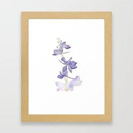 Larkspur Framed Art Print