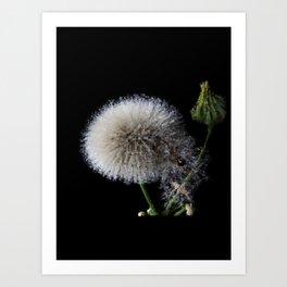 blow flower - 113 Art Print