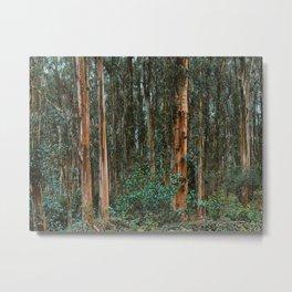 Eucalyptus Trees Near Berkeley California Metal Print