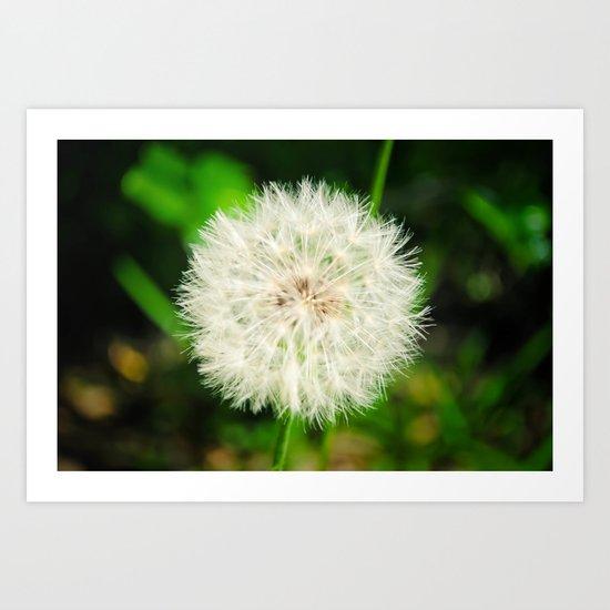 Dandelion. Art Print
