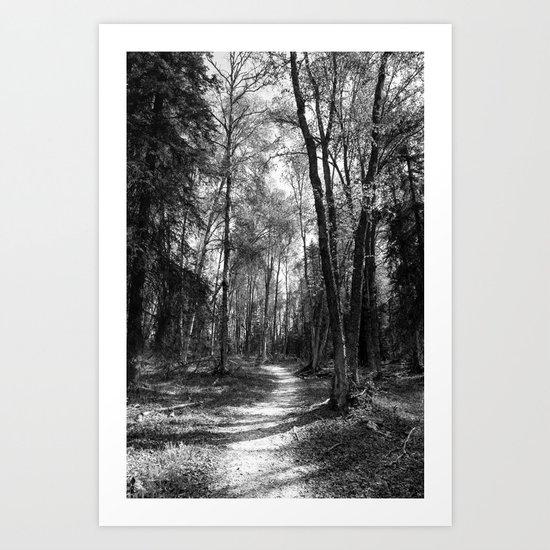 Hiking Path Through Forest Art Print