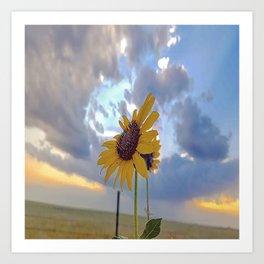 Roadside Sunflower Art Print