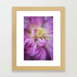 Dark Pink Beauty - Flower Photography Framed Art Print