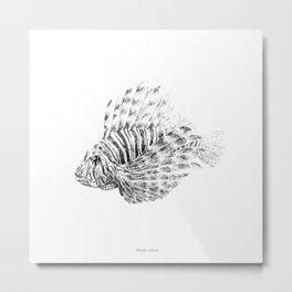 Lionfish - Pterois volitans (black and white, with scientific name) Metal Print