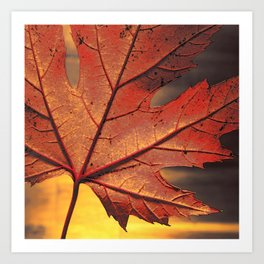 maple leaf - square -brown Art Print