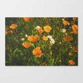 California Poppies 008 Canvas Print