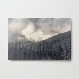 Steamy Forest -  Yellowstone National Park Metal Print