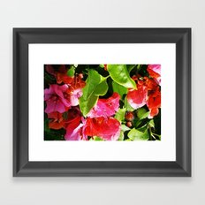 Vibrant pink and red flowers Framed Art Print