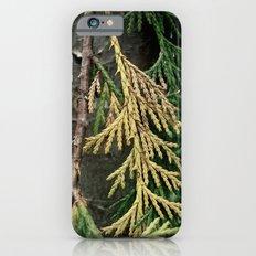 Cedar branch Slim Case iPhone 6s