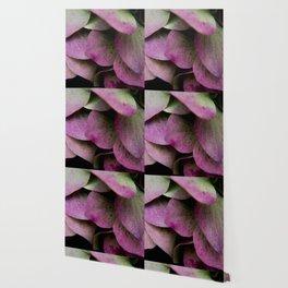 pink hydrangea I Wallpaper