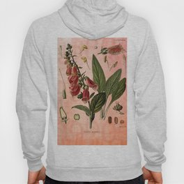 Vintage Botanical Illustration Collage, Foxgloves, Digitalis Purpurea Hoody