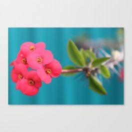 Bright Pink Flowers Canvas Print