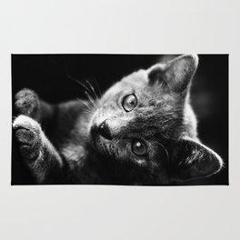 black and white kitten Rug