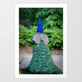 Dancing Eyes Peacock Animal / Wildlife Photograph Art Print