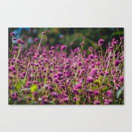Garden  Canvas Print