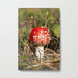 red fly agaric Metal Print