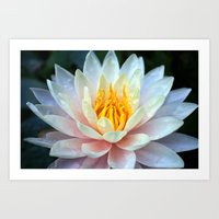 asian Art Prints featuring Asian Lily by Adrian Evans
