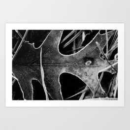 Frosted Edge Art Print