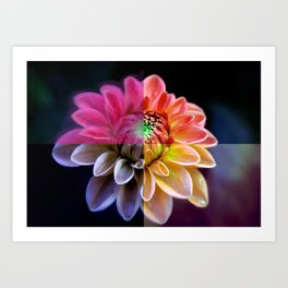 Four Piece Flower (For Peace) Art Print