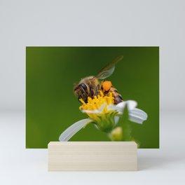 Honey bee Mini Art Print