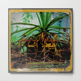 FAVORITE GREEN AGAVE & ROOTS GREENHOUSE  PHOTO Metal Print