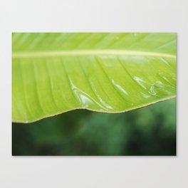 Wet Plants I Canvas Print