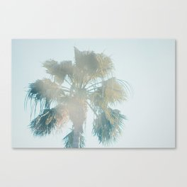 SOLO PALM Canvas Print