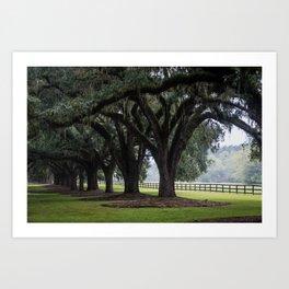 Tree Arch Drive Art Print