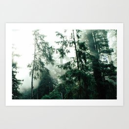 Up In The Woods Art Print