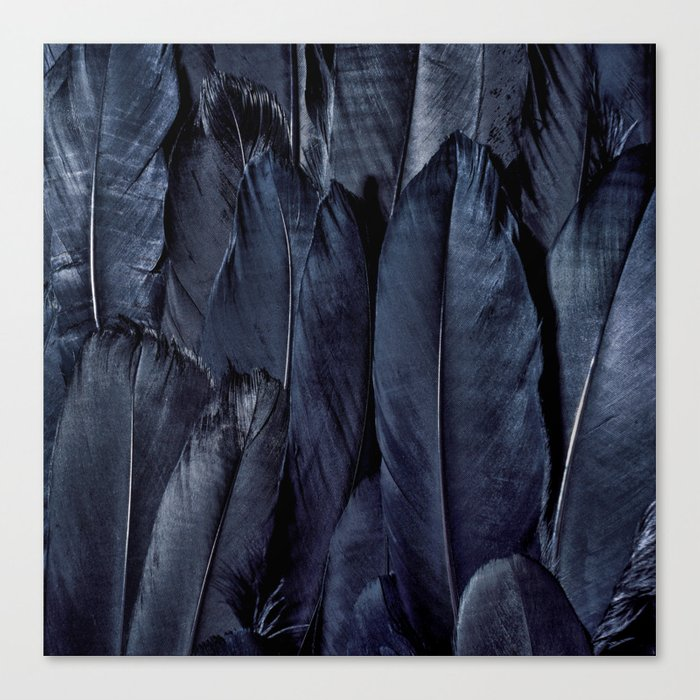 Black Feather Close Up Canvas Print